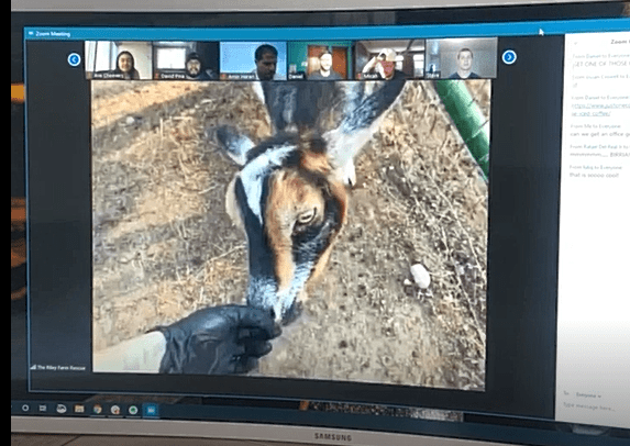 Goat 2 Meeting on Zoom