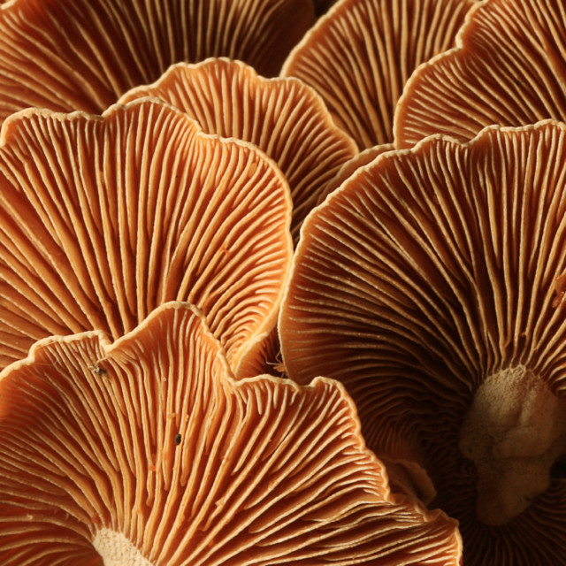Consumers Turn To Mushrooms For Their Health-Boosting Properties